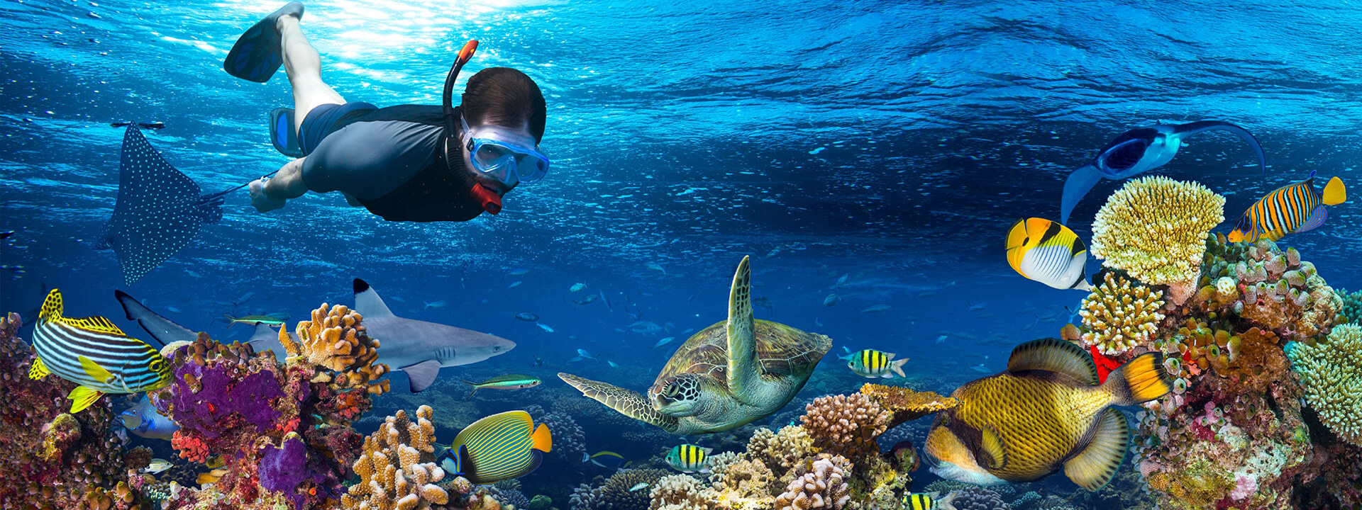 Private Tour Snorkeling in Cancun and Riviera Maya